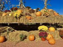 Netter Lastwagen, der Herbsternte anzeigt Stockbild