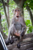 Netter netter Affe der Affen A lebt in einem Naturwald von Thailand Stockfotos