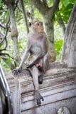 Netter netter Affe der Affen A lebt in einem Naturwald von Thailand Lizenzfreie Stockbilder