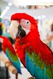 Netter Papagei Stockbild