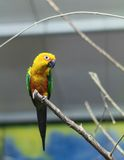 Netter Papagei auf einer Niederlassung Stockfotografie