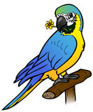 Netter Papagei mit Blume Stockfoto