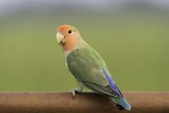 Netter Papageienstand auf unscharfem Hintergrund Lizenzfreies Stockfoto