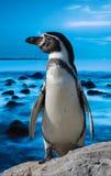Netter Pinguin stockbilder