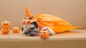 Netter Pughund mit Kostüm des glücklichen Halloween-Tagesschlafes auf Sofa mit Plastikkürbis Stockfotografie