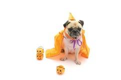 Netter Pughund sitzen und jemand mit glücklichem Halloween-Tag Co wartend Stockfotos