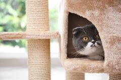 Netter Pussycat auf Katzenbaum lizenzfreies stockfoto