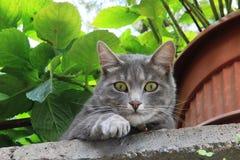 Netter Pussycat, das Umgeben von oben aufpassend lizenzfreie stockfotos