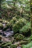 Netter Regenwald-Strom stockfotografie