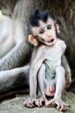 Netter Schätzchen Macaque Lizenzfreies Stockfoto