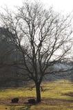 Netter schauender Baum in der Nachmittagsbeleuchtung Lizenzfreies Stockbild