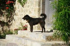 Netter schwarzer Hund Lizenzfreie Stockfotos