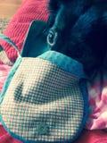 Netter schwarzer Hund Stockfoto