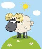Netter schwarzer Kopf Ram Sheep Cartoon Character On ein Hügel Stockbilder