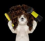 Netter shitzu Hund im Badekurortpflegensalon Lokalisiert auf Schwarzem lizenzfreies stockfoto