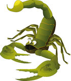 Netter Skorpion Stockbild