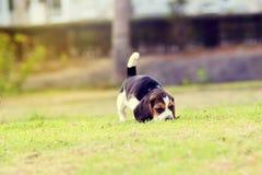 Netter Spürhund stockbild