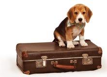 Kleiner Welpe, der auf dem Koffer sitzt Stockbild