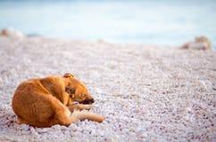 Netter streunender Hund auf dem weißen Felsenstrand Stockbild