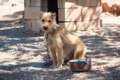 Netter trauriger Hund auf einer Kette betrachtet die Kamera stockfotografie