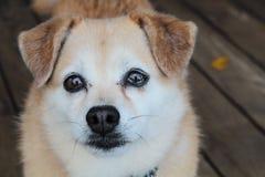 Netter trauriger Hundeabschluß oben Stockbilder