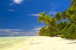 Netter tropischer Wald auf dem Strand im Indischen Ozean Lizenzfreie Stockfotos