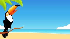 Netter Tukanvogel und einfacher Strandhintergrund Stockfoto
