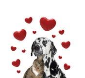 Netter Valentinsgrußhund und -katze zusammen lizenzfreie stockfotografie