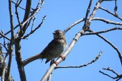 Netter Vogel, der ein sunbath nimmt Lizenzfreie Stockfotos