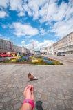 Netter Vogel mit schönem Garten in der alten Stadt von Linz, Österreich Lizenzfreies Stockbild