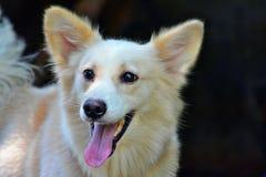Netter weißer Hund lizenzfreies stockbild