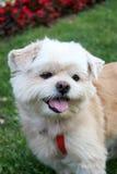 Netter weißer Hund Stockfoto