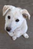 Netter weißer Hund, der oben Kamera betrachtet stockfoto
