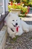 Netter weißer Hund im Garten lizenzfreie stockfotos