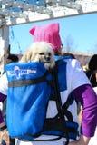 Netter weißer Hund im Rucksack auf Frau im rosa Pussyhut beim März der Frauen in Tulsa Oklahoma USA 1-20-2018 lizenzfreie stockbilder