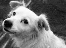 Netter weißer streunender Hund, der die Kamera betrachtet Lizenzfreie Stockfotografie