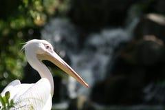 Netter weißer Vogel Stockbild