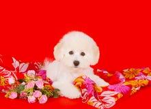 Netter weißer Welpe mit rosa Blumen auf einem roten Hintergrund Schöner flaumiger und gelockter Hund Lizenzfreie Stockfotos