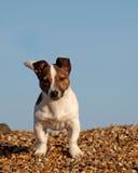 Netter Welpe auf dem Strand Stockfotos