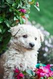 Netter Welpe in den Blumen Lizenzfreies Stockfoto