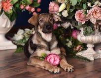 Netter Welpe, der auf dem Boden mit Blumen liegt lizenzfreies stockfoto