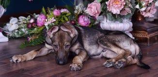 Netter Welpe, der auf dem Boden mit Blumen liegt stockfotos