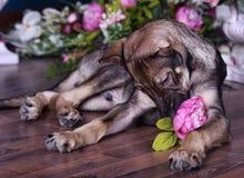Netter Welpe, der auf dem Boden mit Blumen liegt lizenzfreie stockfotos