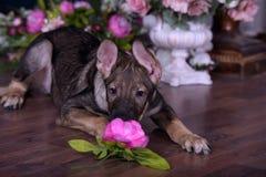 Netter Welpe, der auf dem Boden mit Blumen liegt stockbild