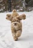 Netter Welpe, der im Schnee spielt Stockfotos