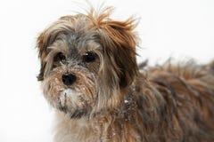 Netter Welpe im Schnee Stockfotografie