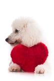 Netter Welpe mit einem roten Herzen stockbilder