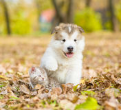 Netter Welpe und kleines Kätzchen, die zusammen im Herbstpark sitzt Stockfoto