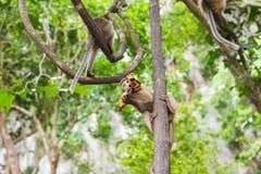 Netter wilder Affe Stockfotos