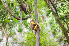 Netter wilder Affe Lizenzfreie Stockbilder